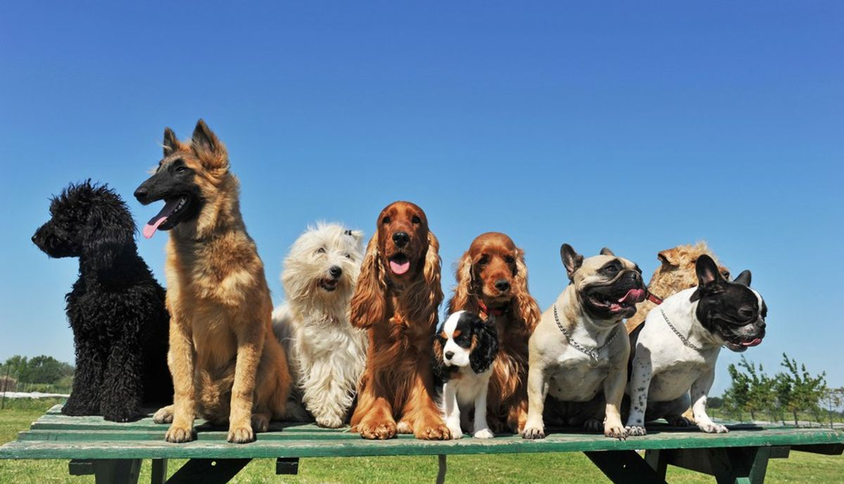 15 Fun Facts About Dogs