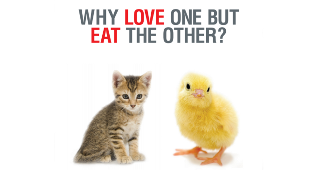 Are You A Meat-Eating Animal-Lover?