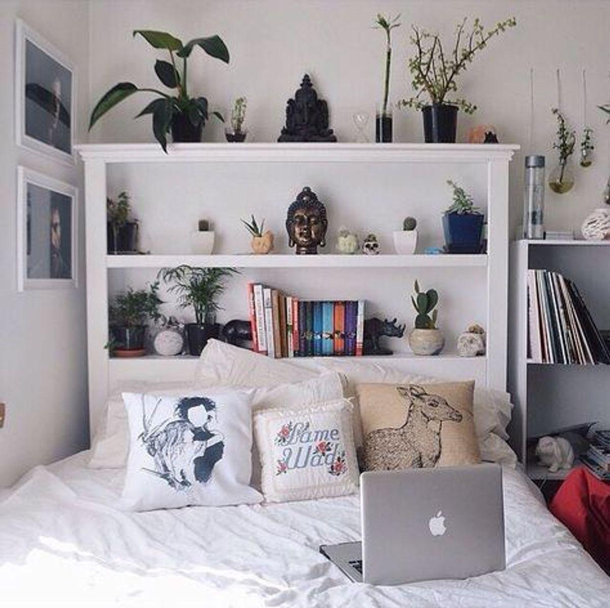 10 Best Plants For Dorm Rooms