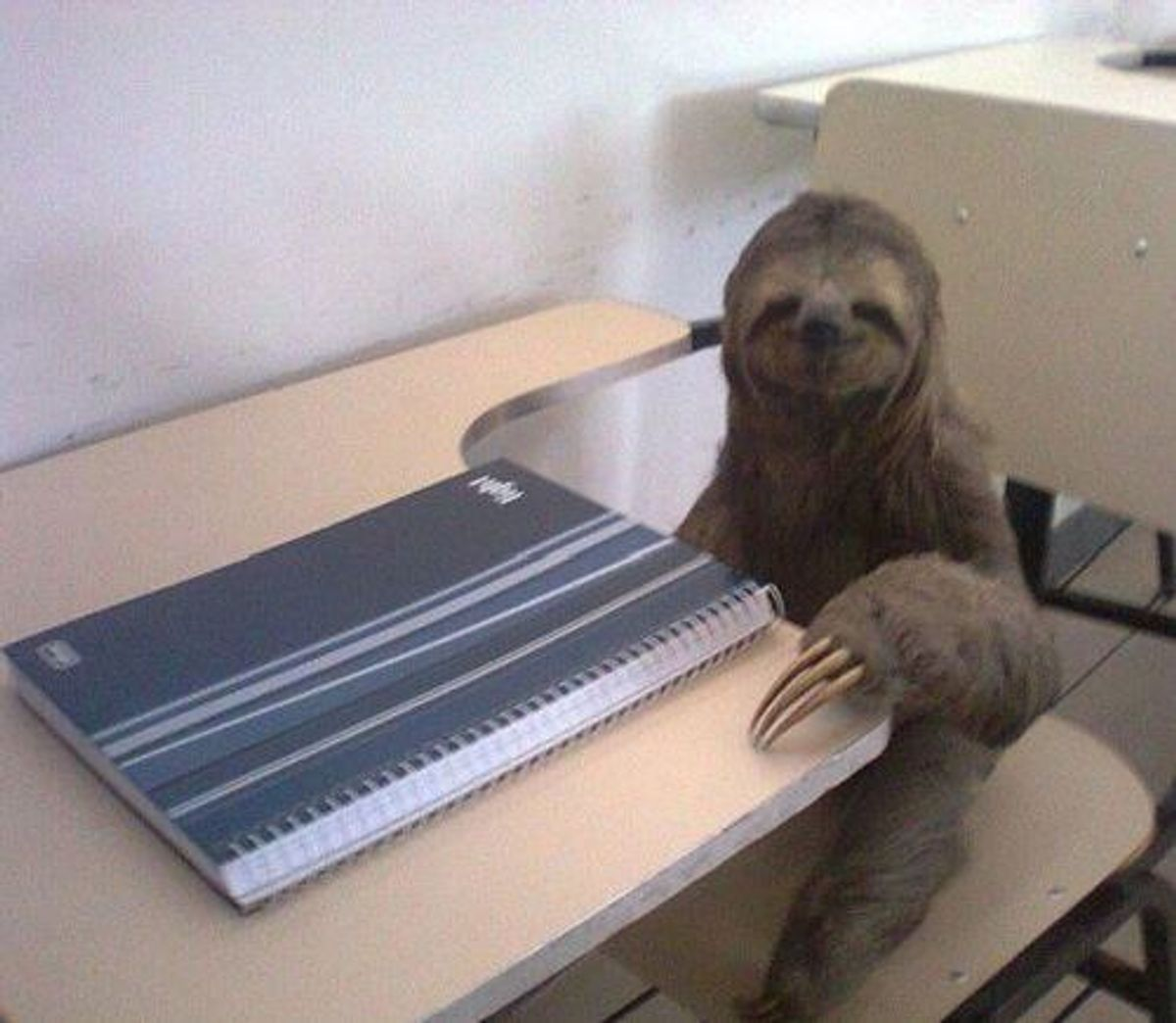 The Stages Of Procrastination As Told By Sloths