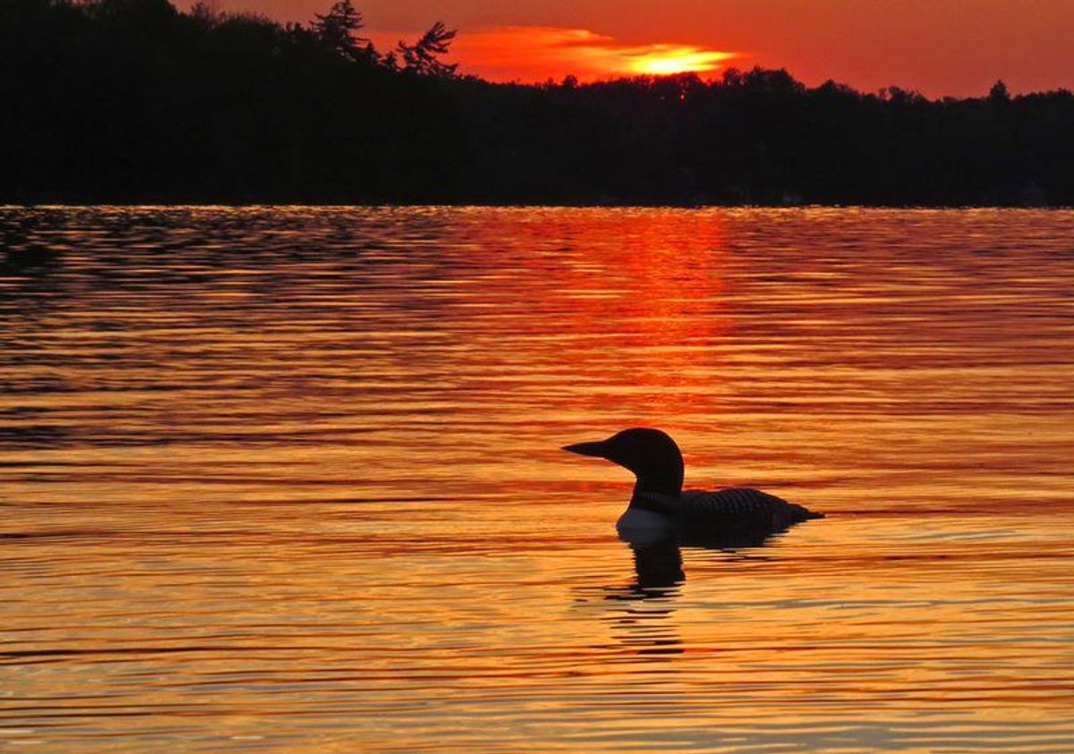 The Beloved Boundary Waters And The Battle Against Pollution