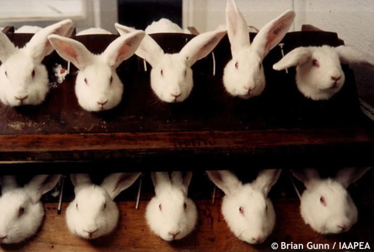 Why Has The U.S. Not Banned Cosmetic Animal Testing?