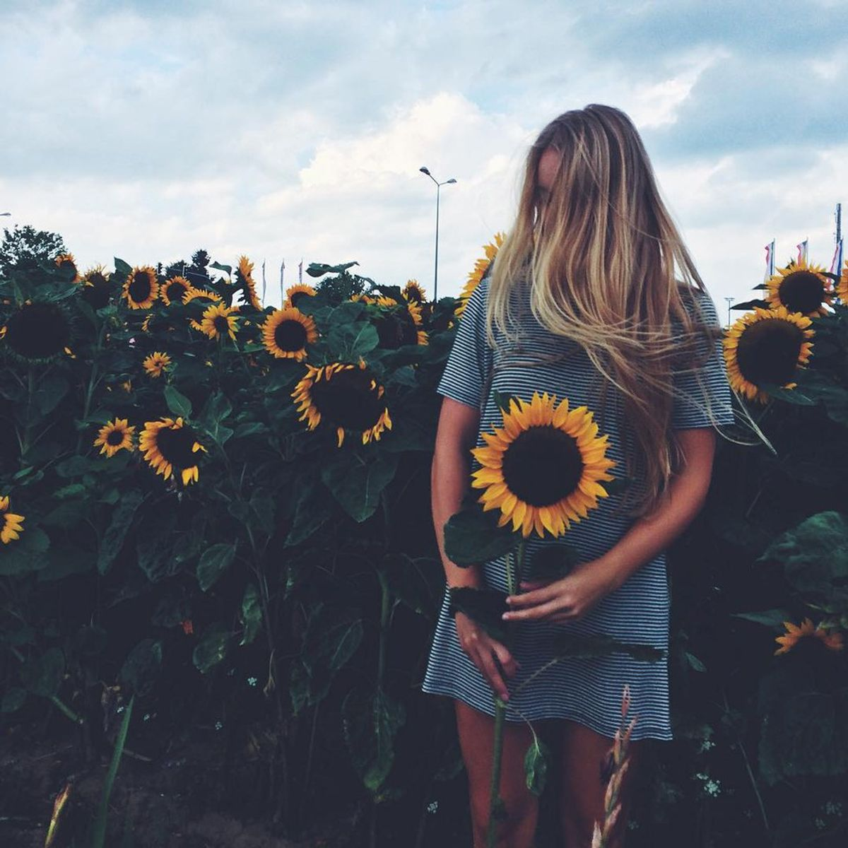 Are You A Human Or A Sunflower?
