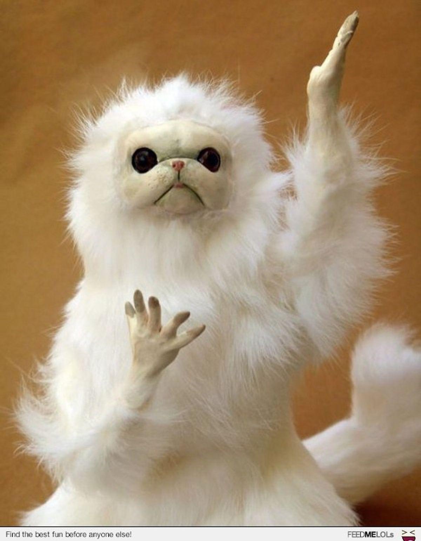 12 Persian Cat Room Guardian Memes