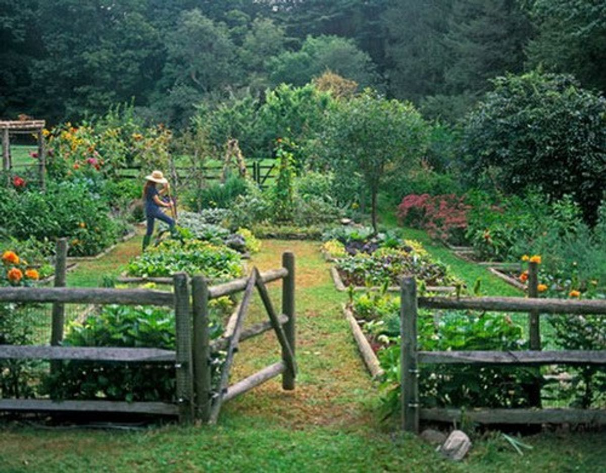 7 Reasons Why Gardening Should Be Your New Hobby