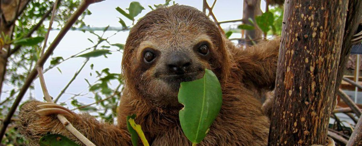 9 Sloth Facts to Brighten Your Day!