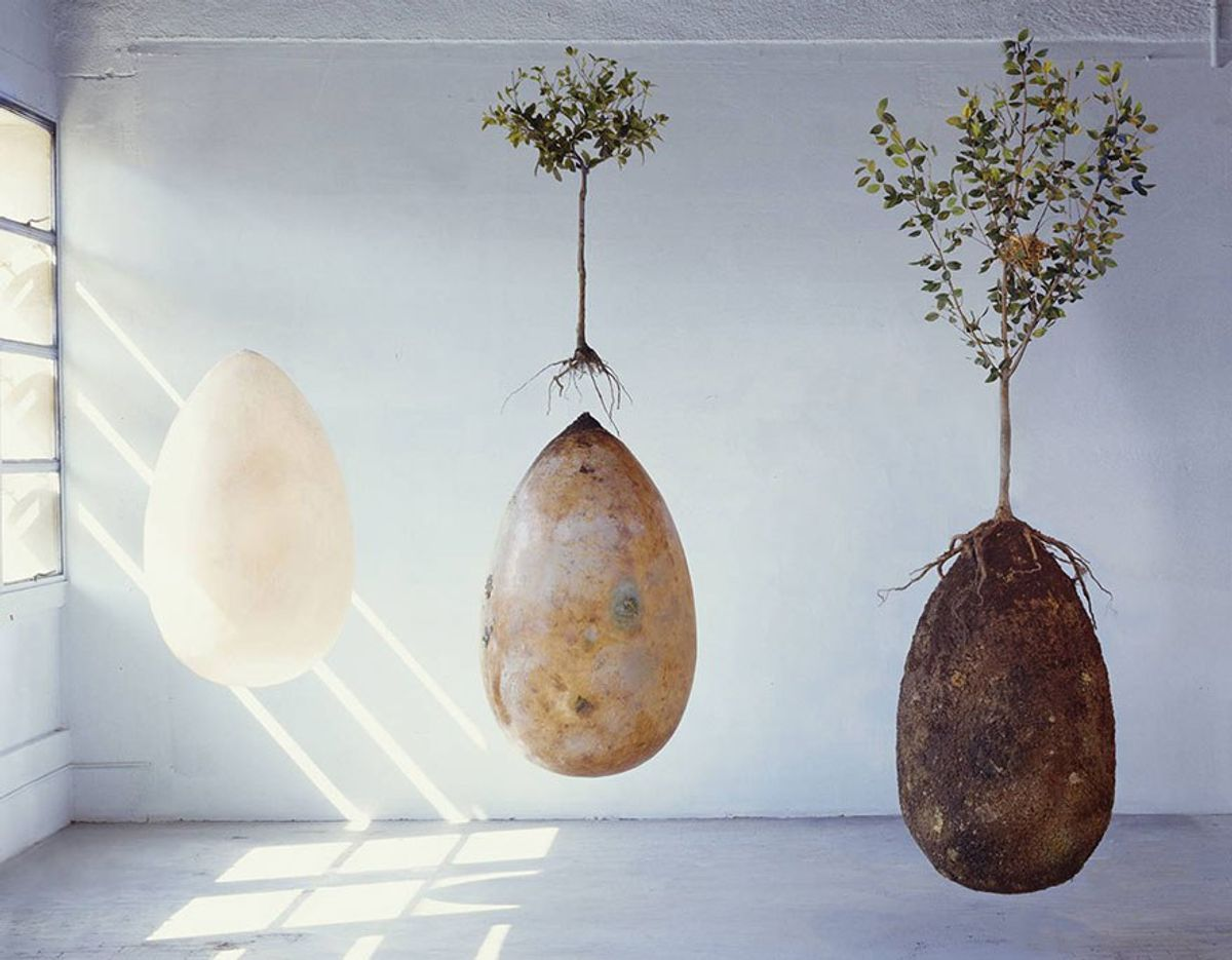 Live On As A Tree With Burial Pods