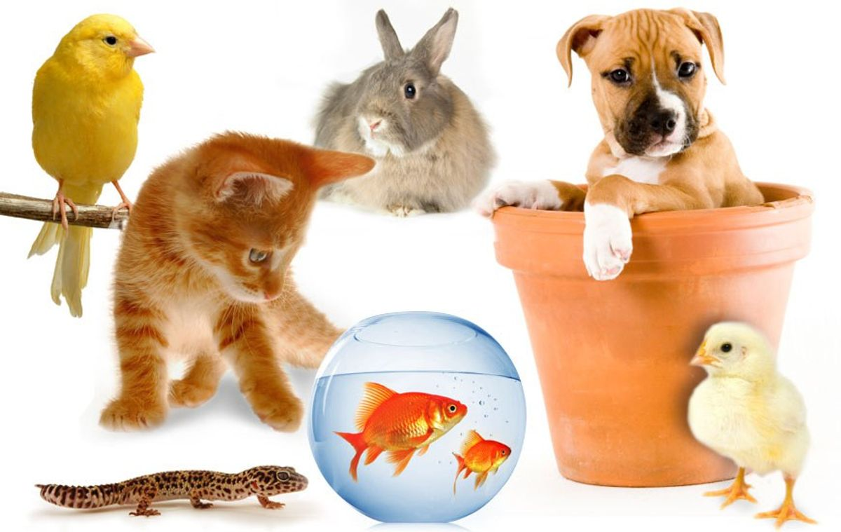 7 Reasons Why College Students Shouldn't Buy A Pet
