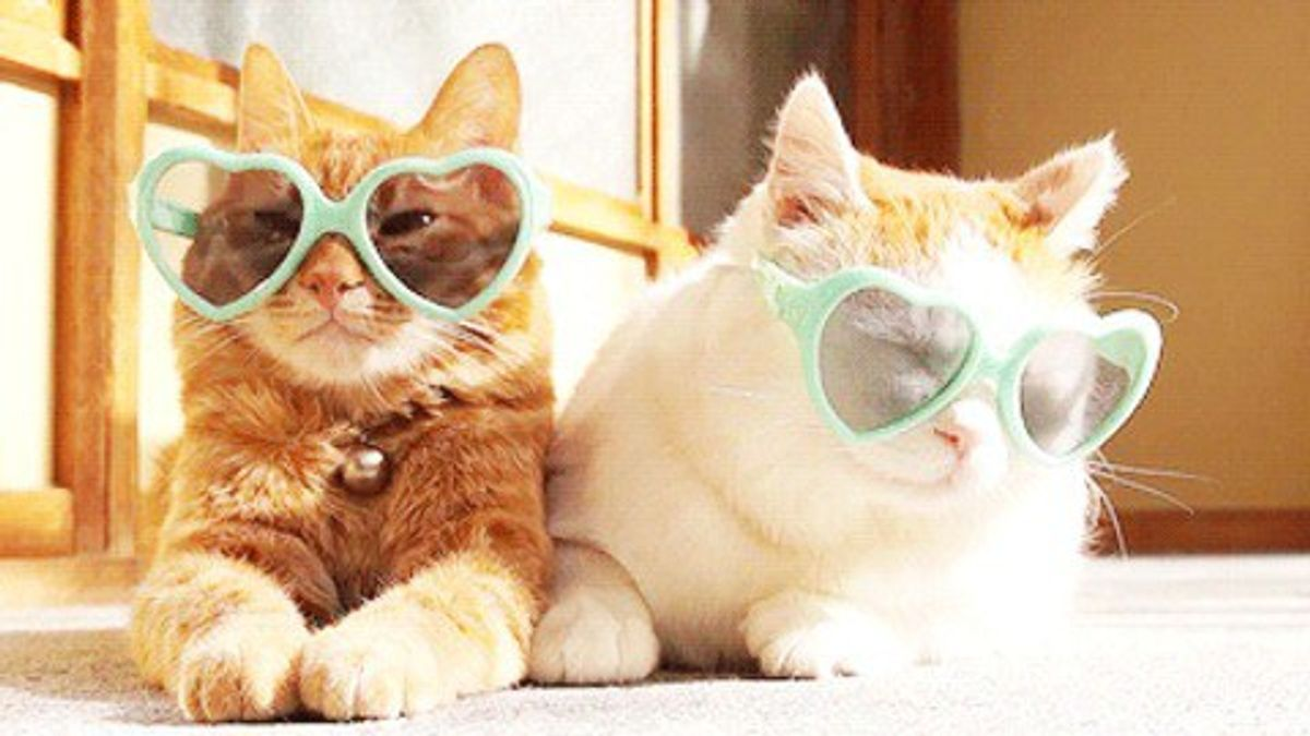 20 Reasons To Have A Cat Or Two