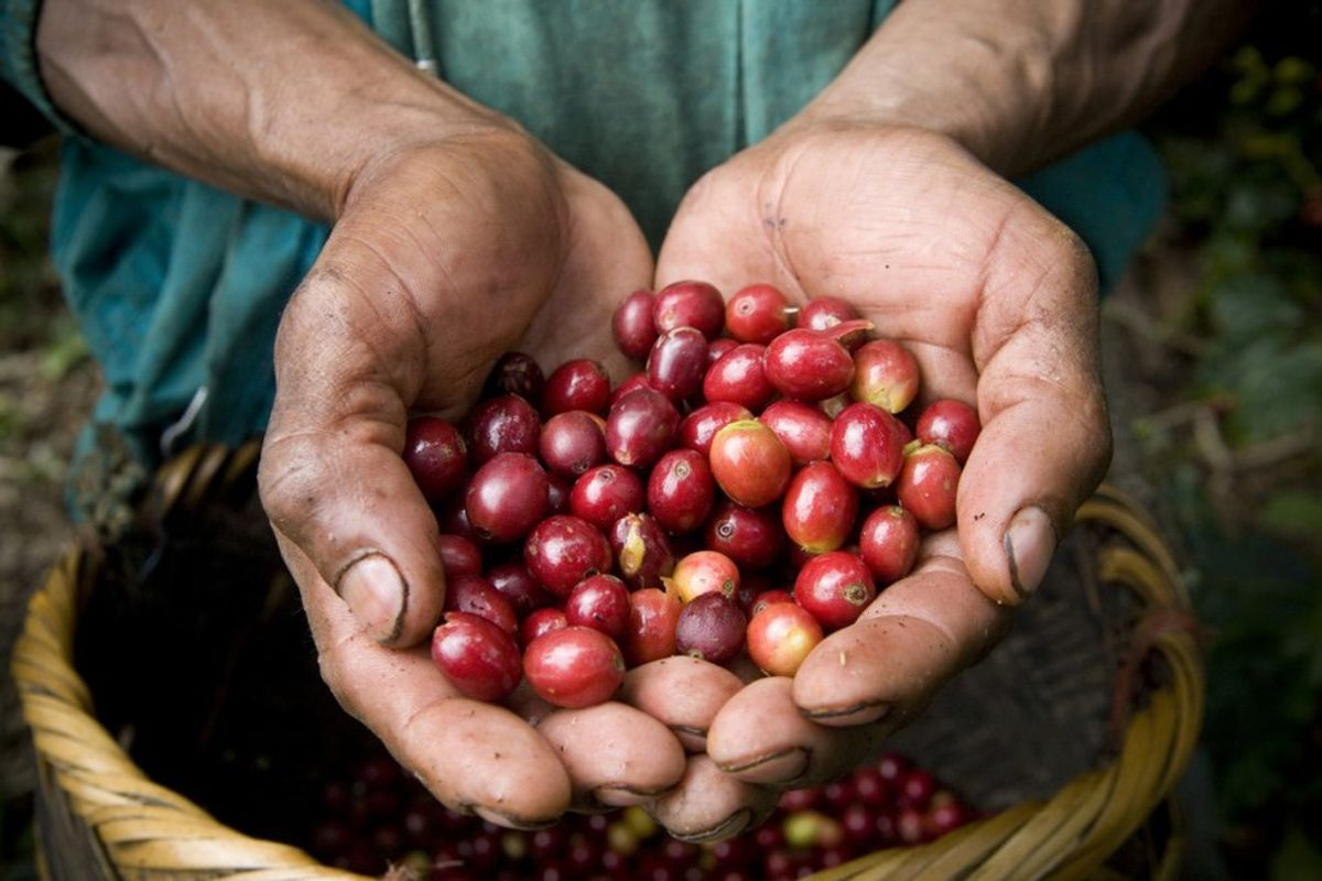 8 Fair Trade Coffee Brands That Are As Good As Their Cause.