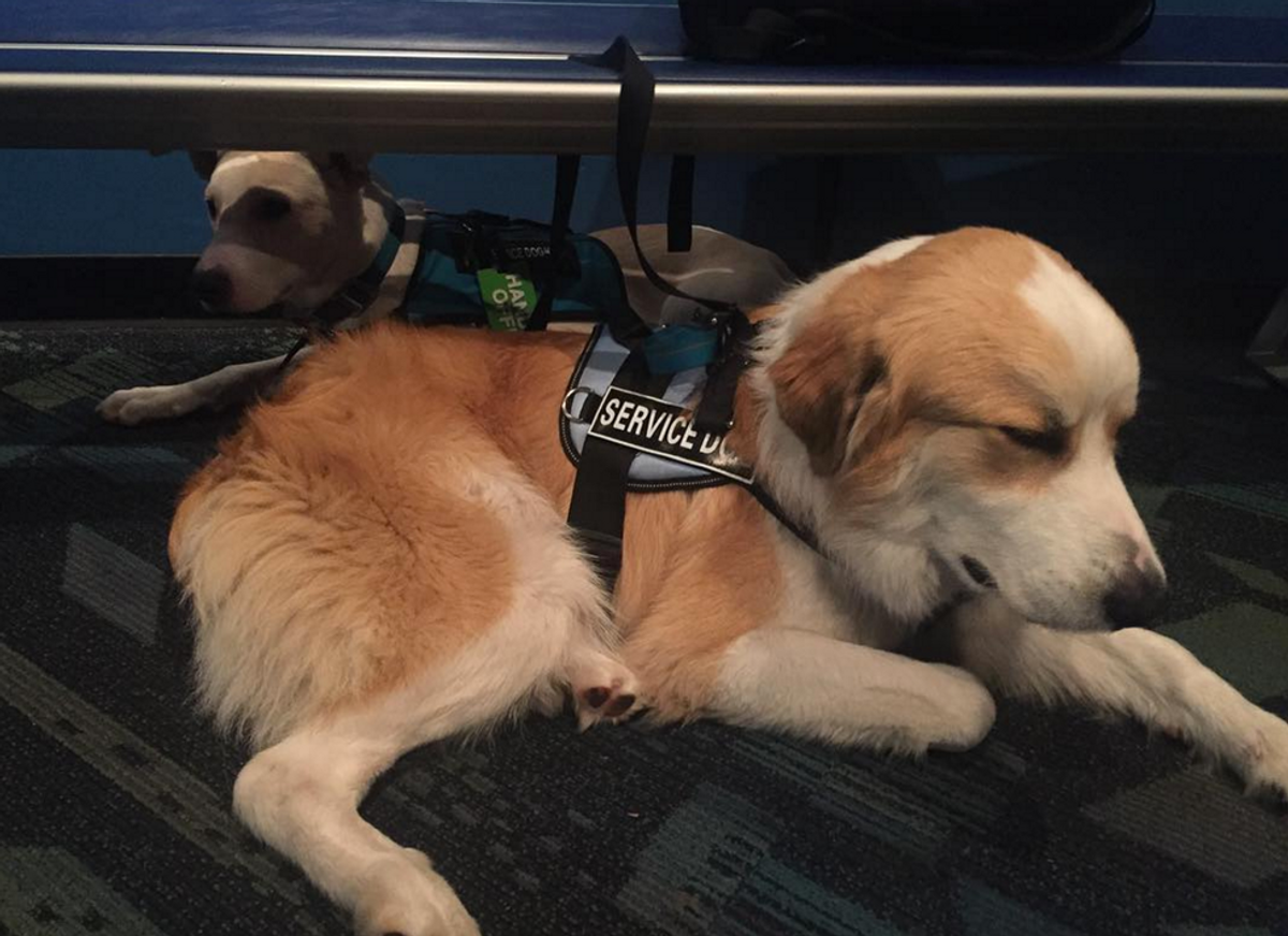 Service Dogs For Anxiety: Harmful or Helpful?