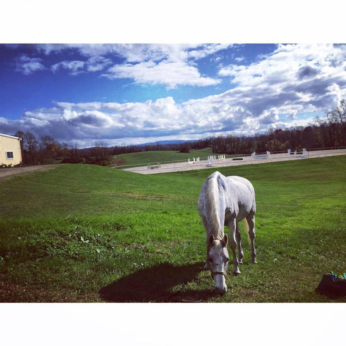 An Open Letter To The Horse Of A Lifetime