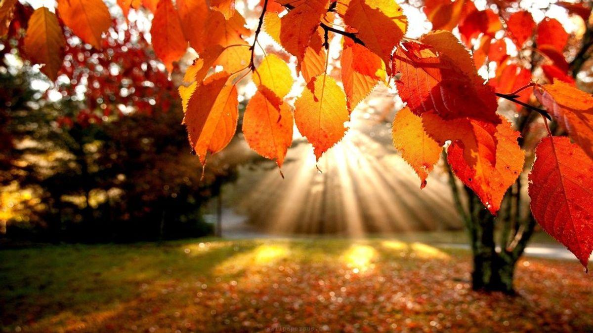 11 Reasons To Look Forward To Fall