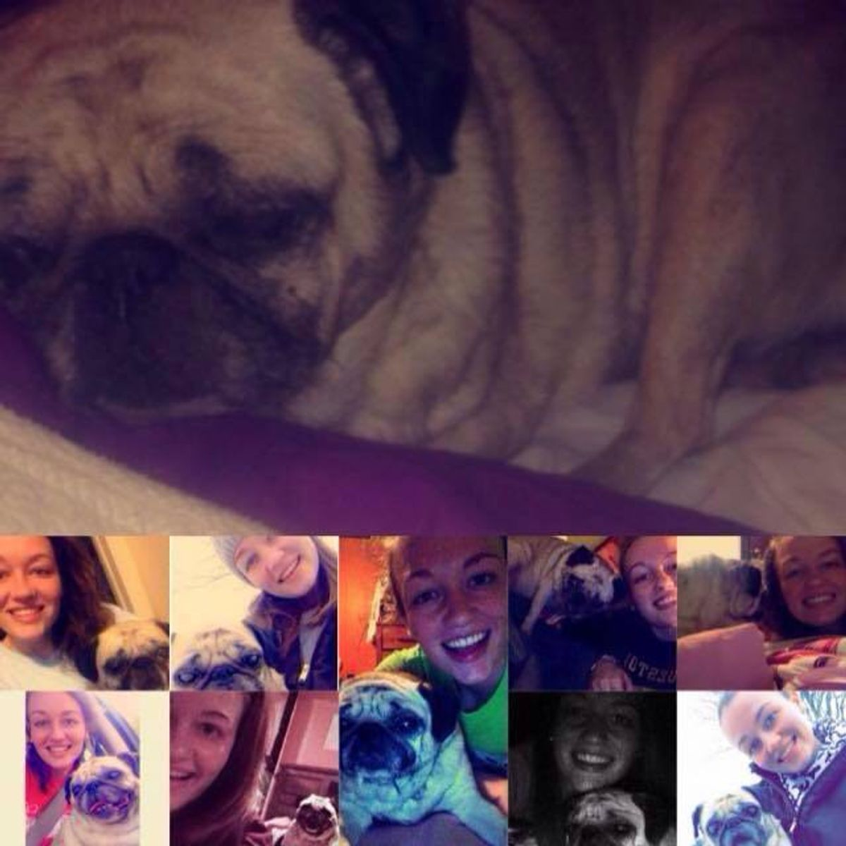 To My Four Legged Baby In Heaven