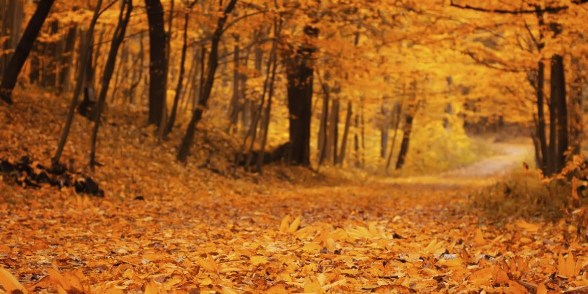 A Love Letter To October