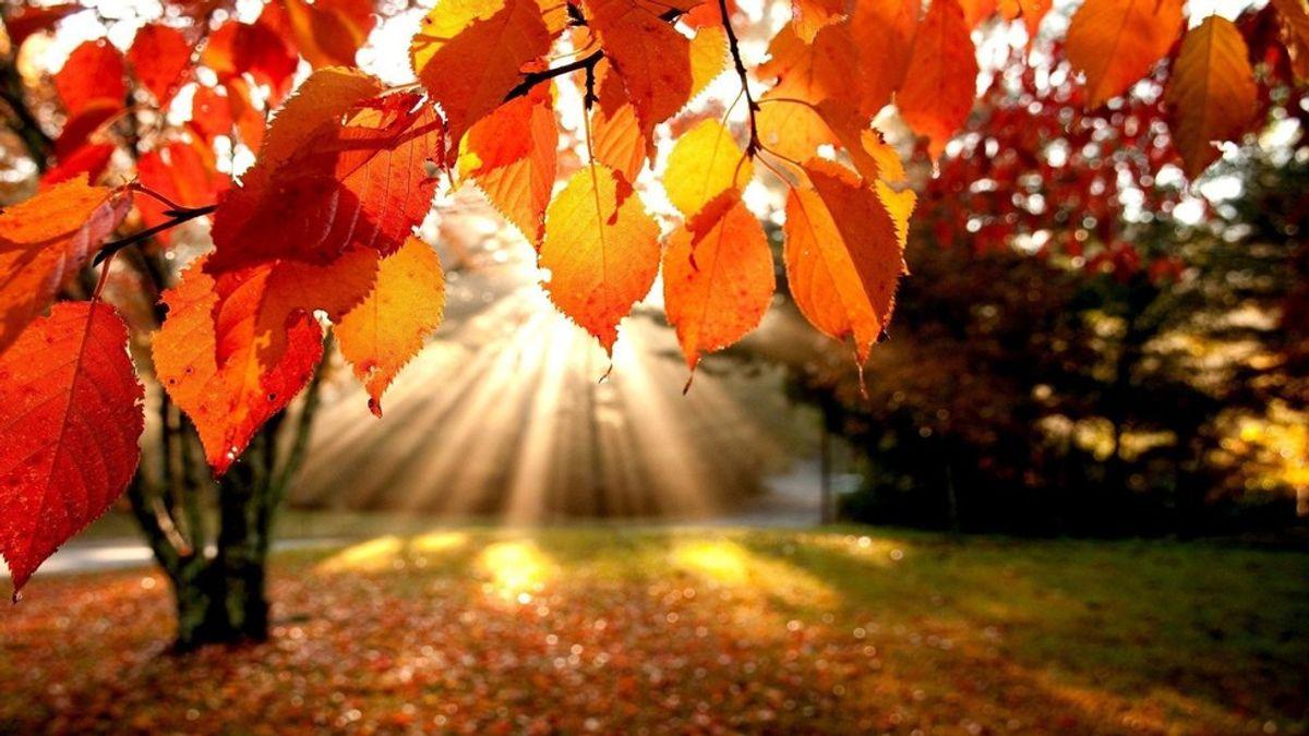 10 Reasons Why Autumn Is My Favorite Season