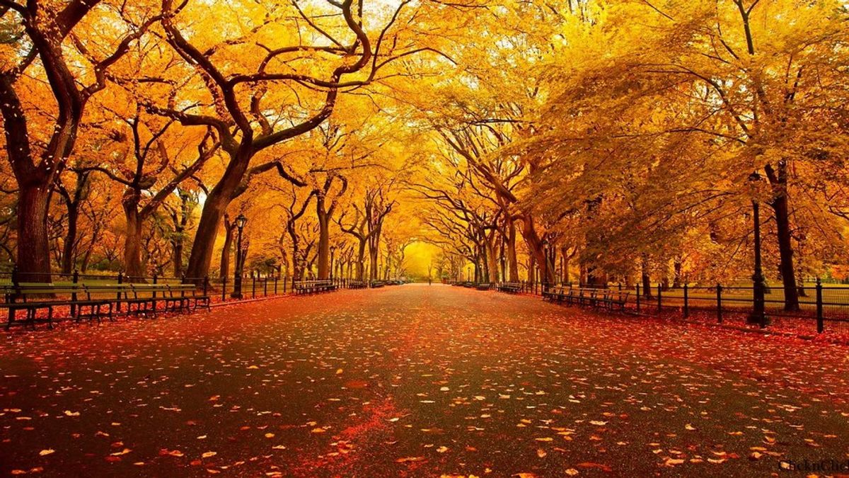 9 Reasons Why Fall Is The Best Season