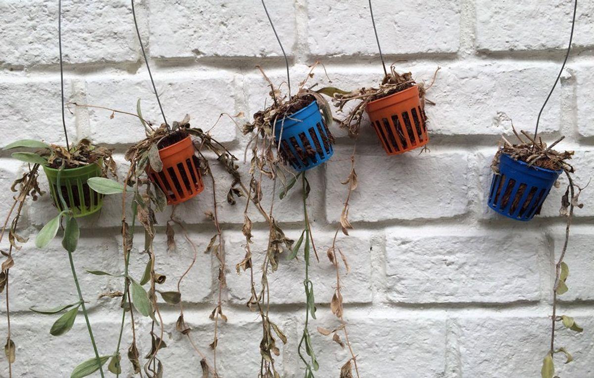 Real Life Struggles Of A Plant Killer