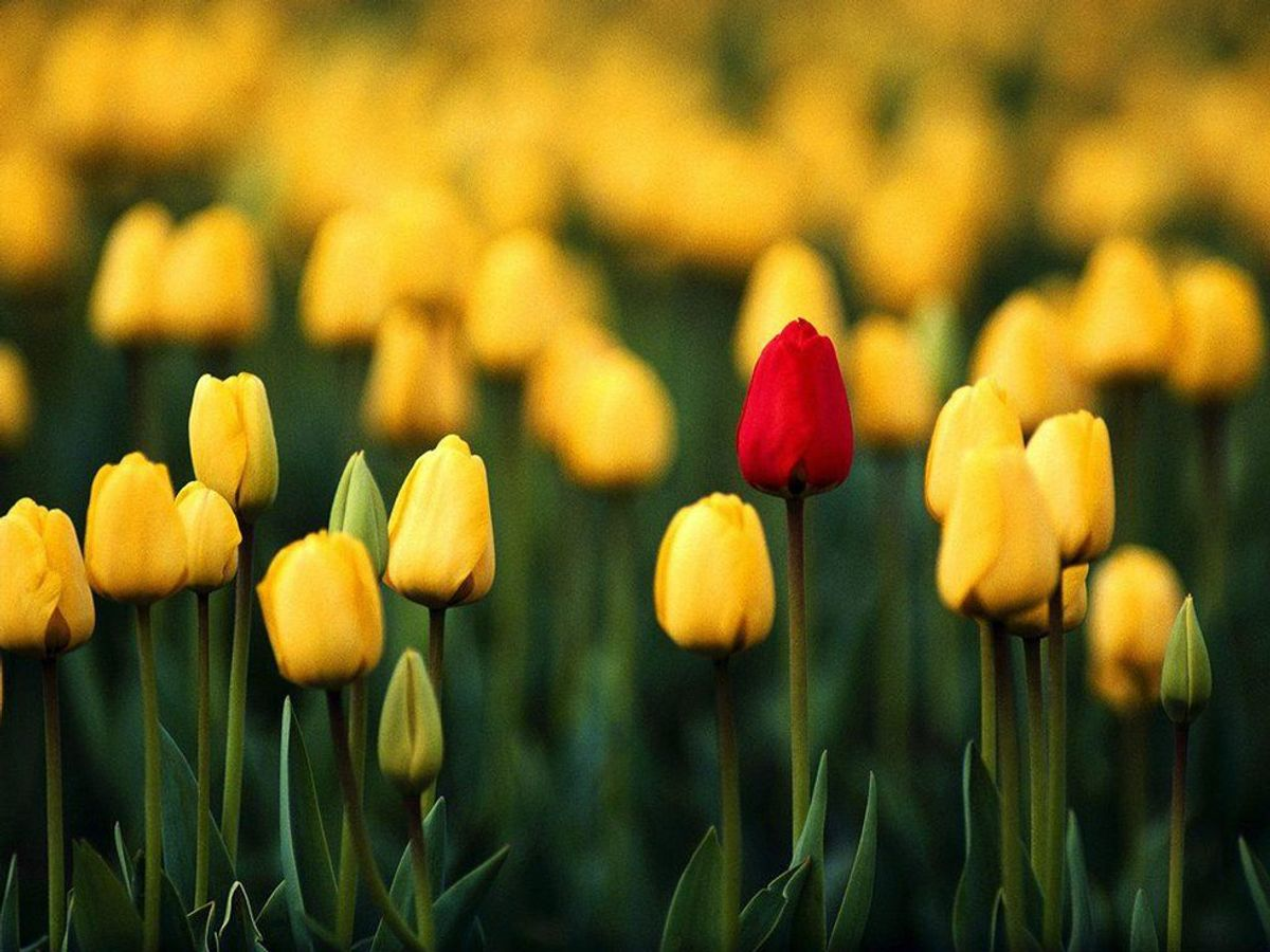 People Are Like Flowers: They Can Bloom Beautifully