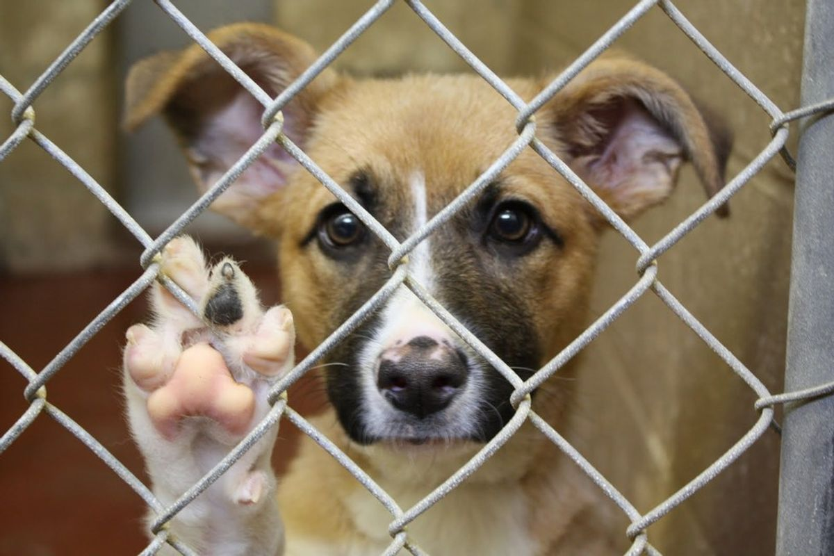 9 Reasons You Should Adopt, NOT Shop