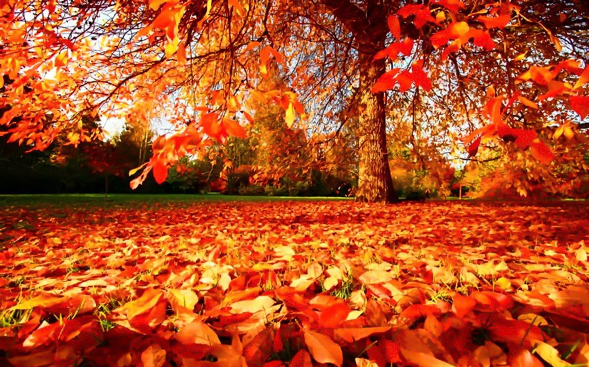 The 10 Best Things About Autumn