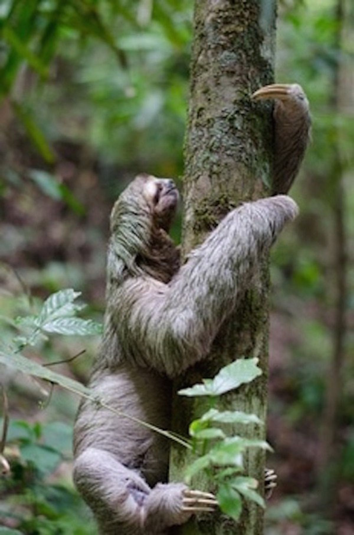 10 Reasons Why Sloths Are The Greatest Creatures in the World