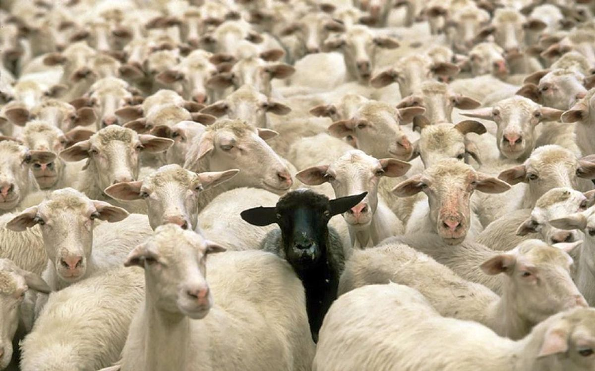 How Life Is As A Black Sheep