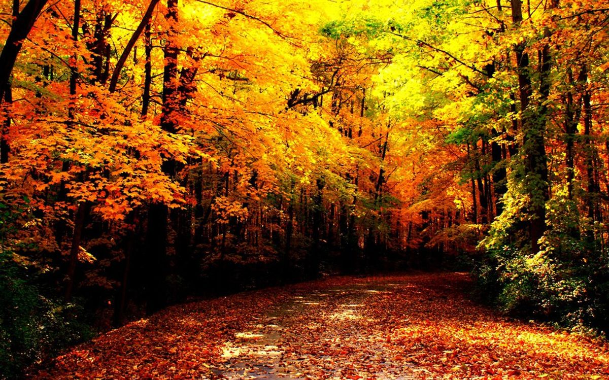 8 Spotify Playlists To Get You In The Autumn Mood