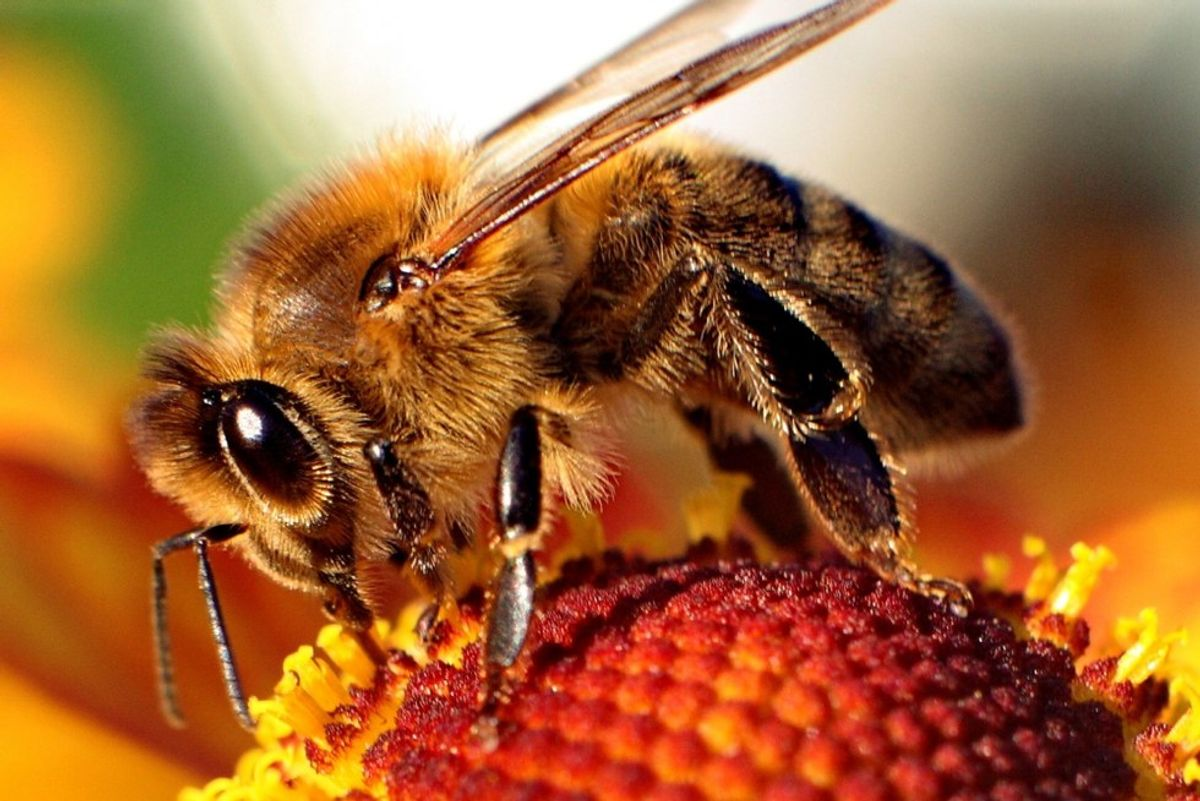 SCAD Mascot Put on Endangered Species List:  Bees' Creative Influence on Art, Health and Humanity