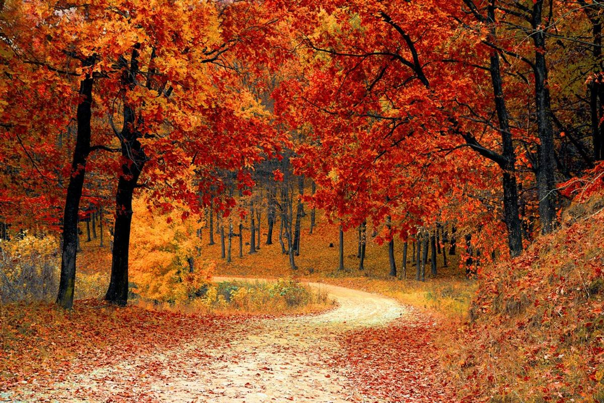 10 Reasons Why You Should Fall In Love With Fall