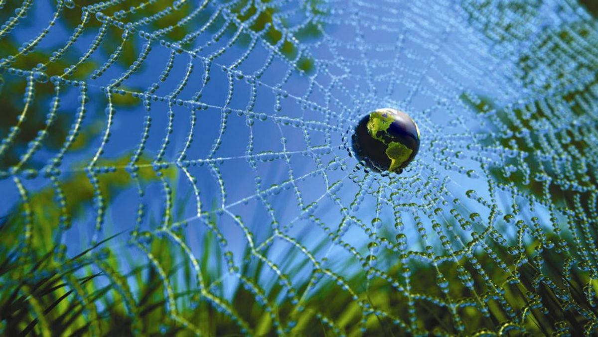 Why We Must Protect The Web Of Life
