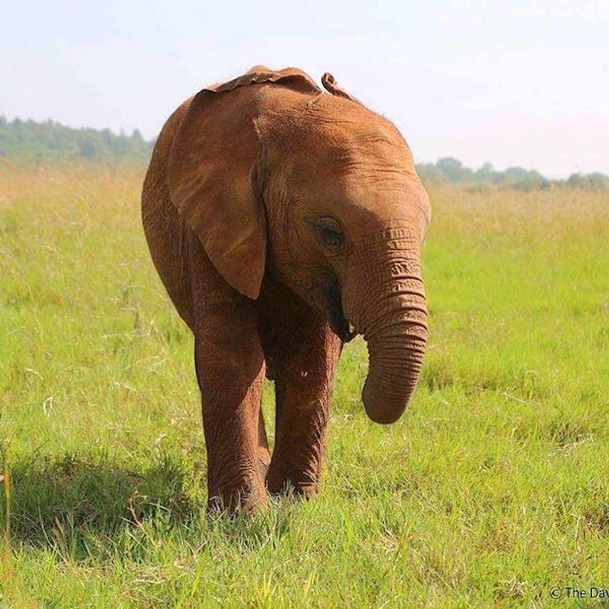 A Voice For The Elephants