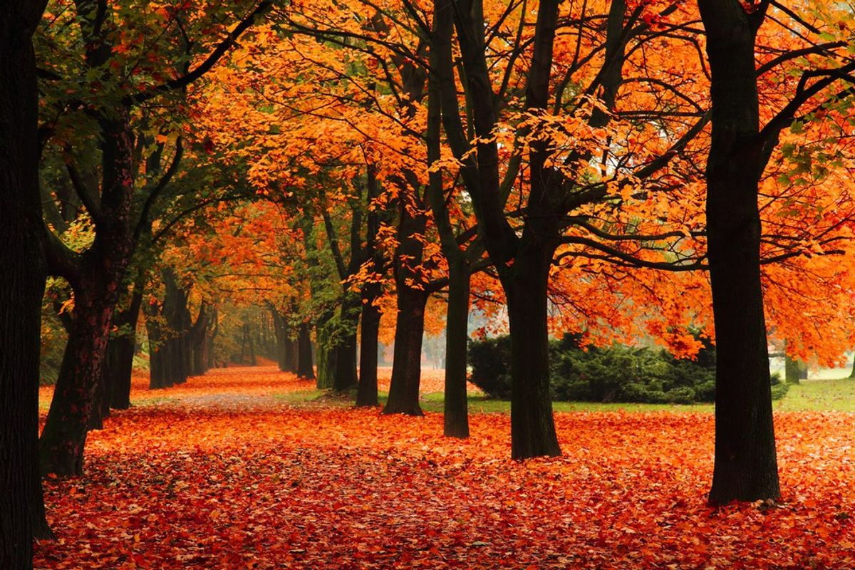 5 Reasons Why Fall Is the Best Season Ever