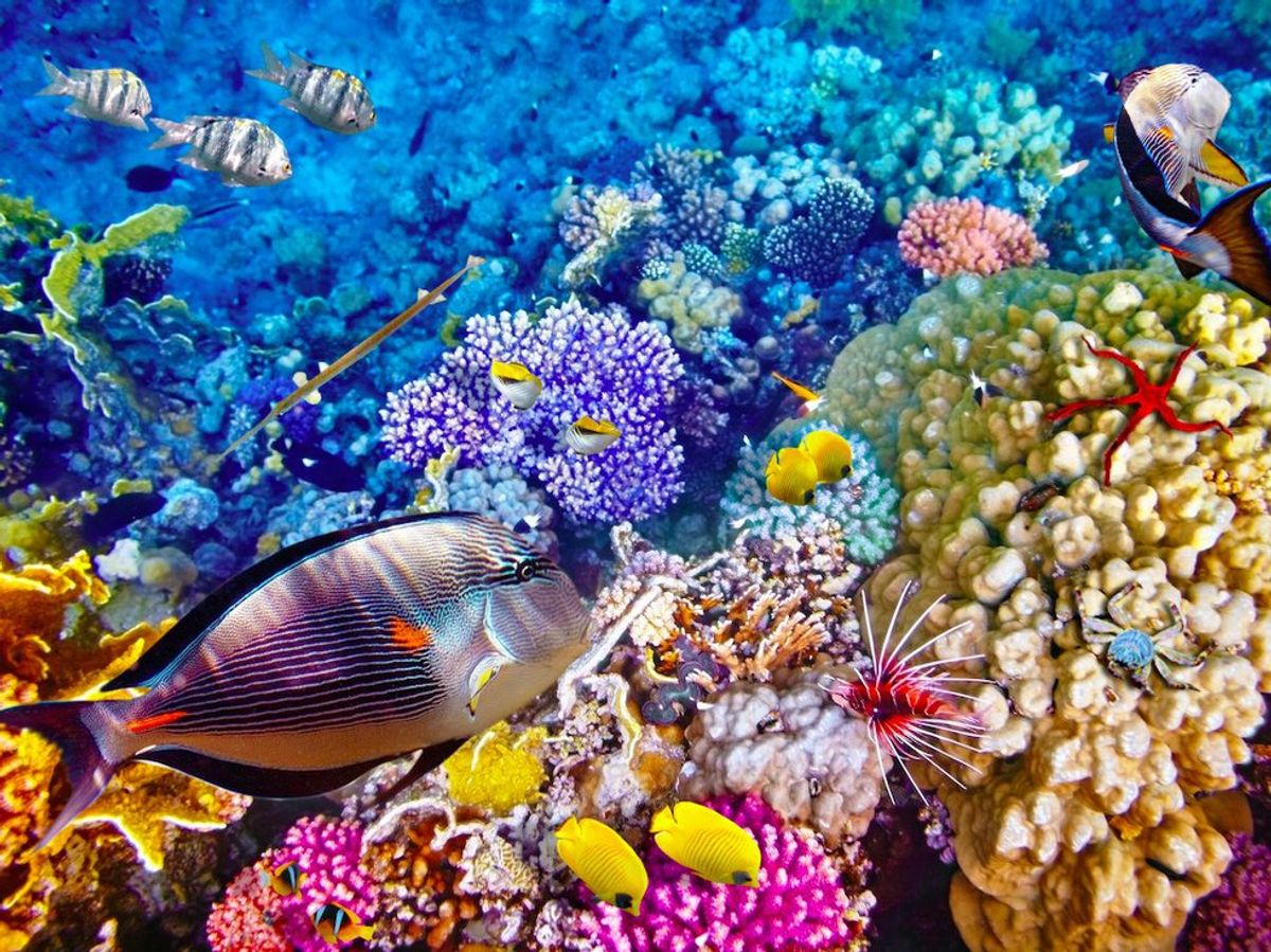 Great Barrier Reef Obituary Goes Viral