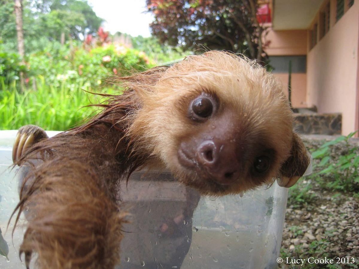 Sloth Day 2016