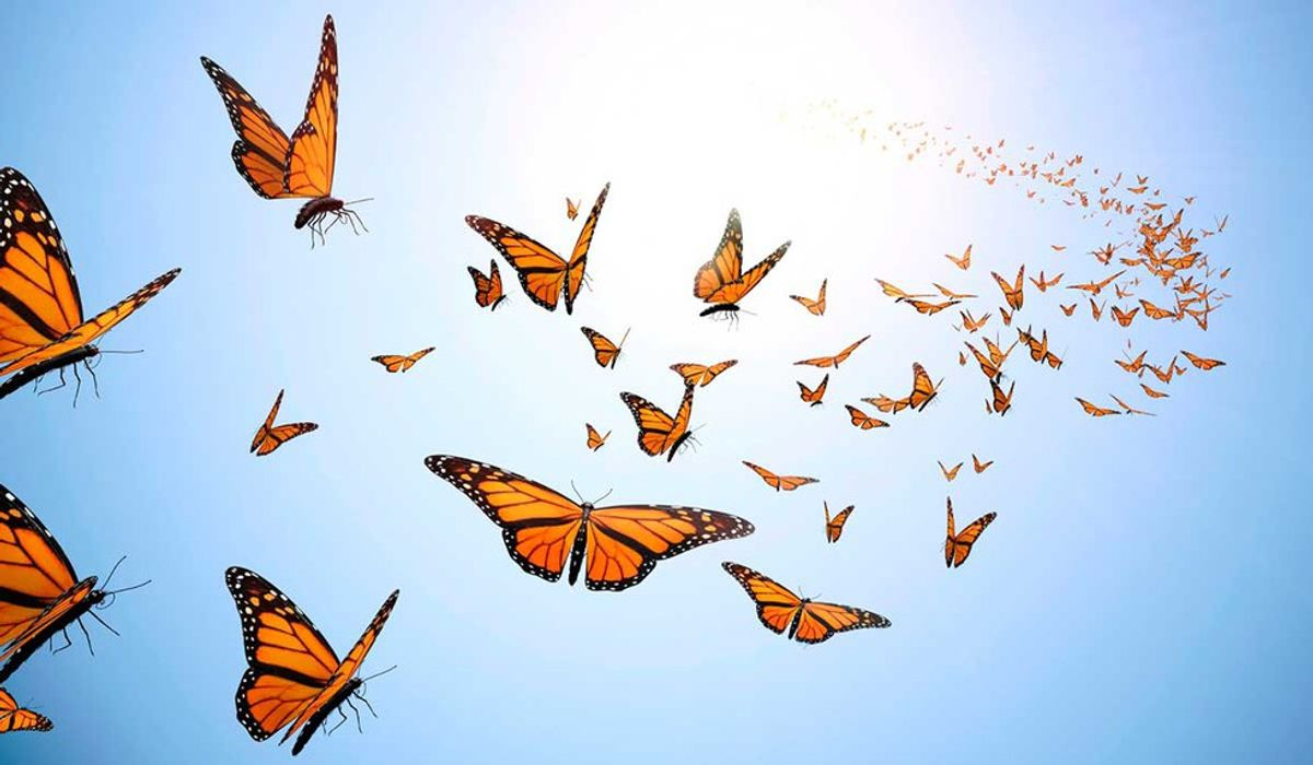 Pros And Cons To Being A Social Butterfly