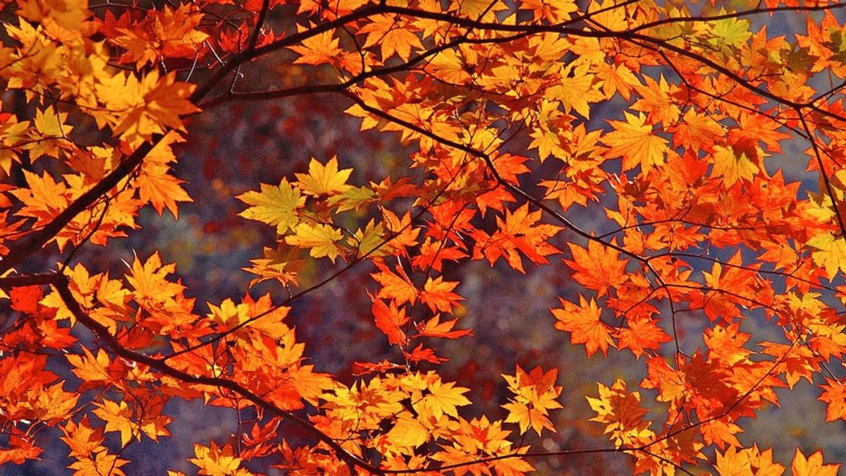 Fall Is The Most Beautiful Season