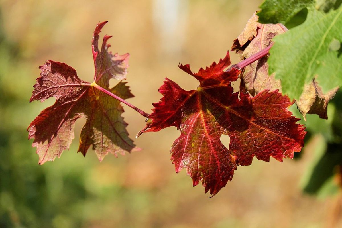 5 Signs It's Autumn