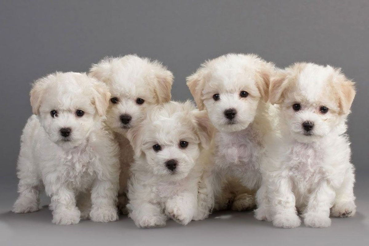 15 Puppies To Help You De-stress