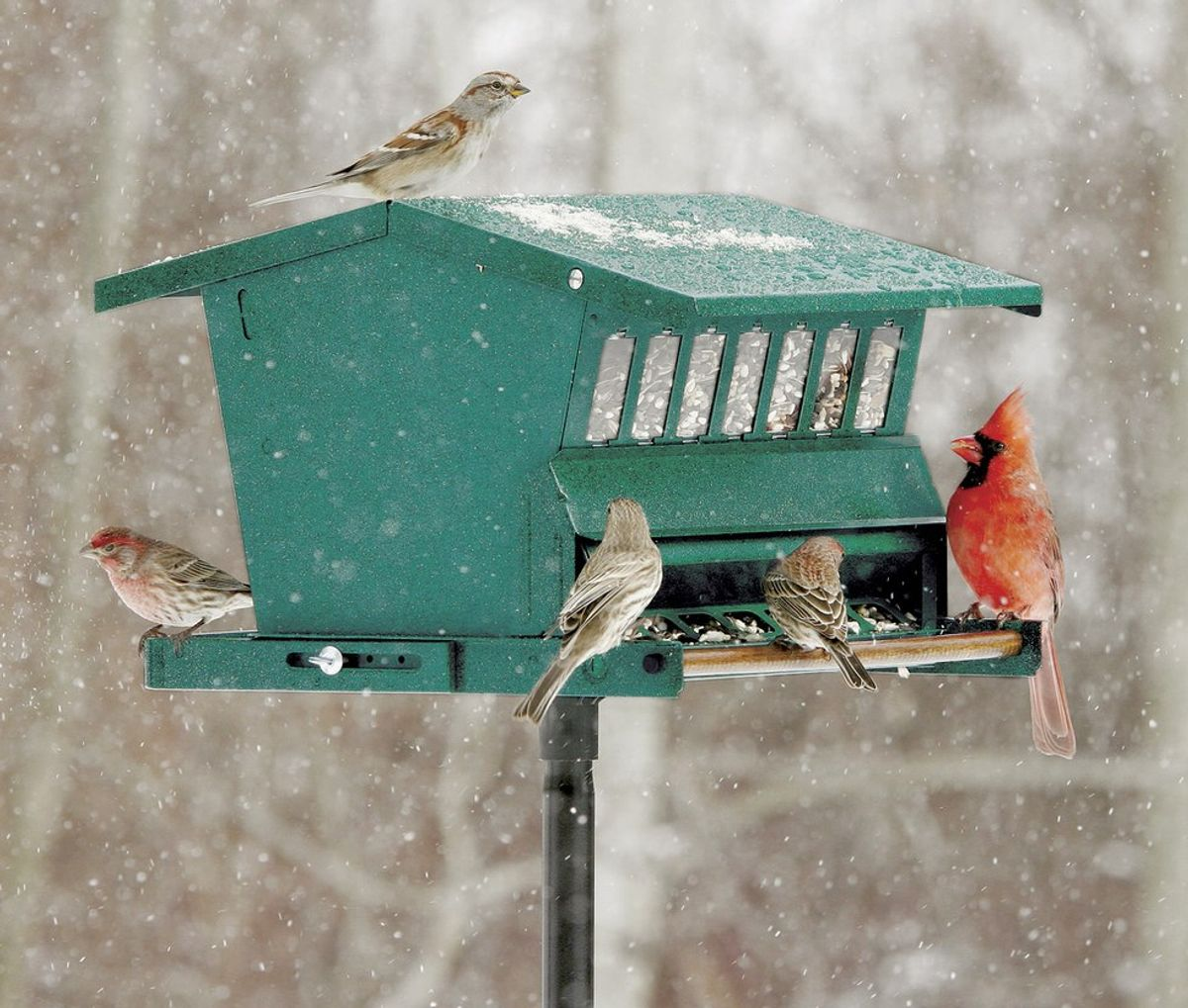 How To Choose The Right Birdfeeder