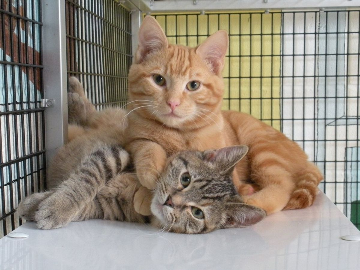 6 Things You Might Not Know About Shelter Cats