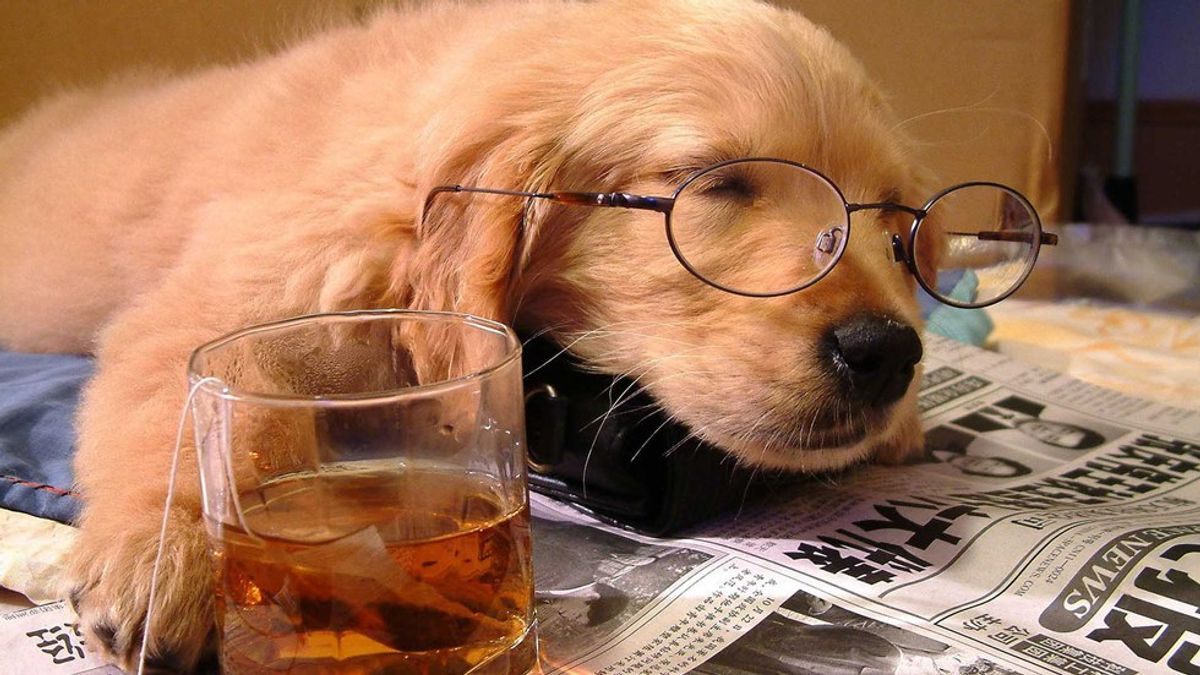 8 Dogs That Will Definitely Cheer You Up During Finals Week