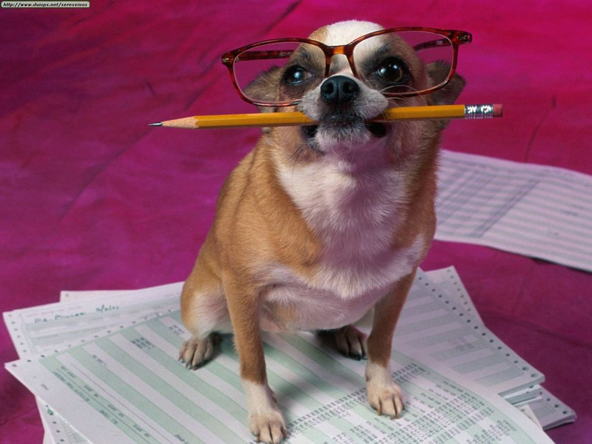 10 Dog GIFs That Will Help You Survive Finals Week