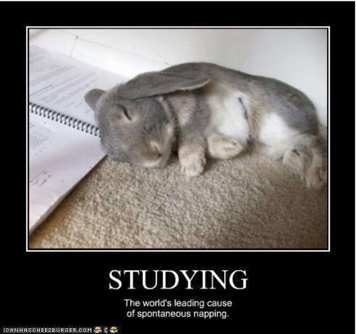 Finals Week Told By Cute Animals