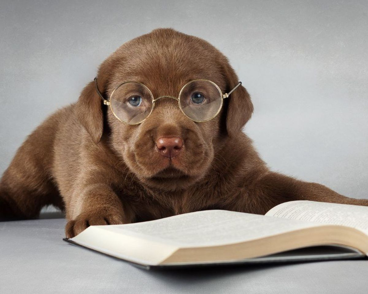 Finals Week (as told by puppies)