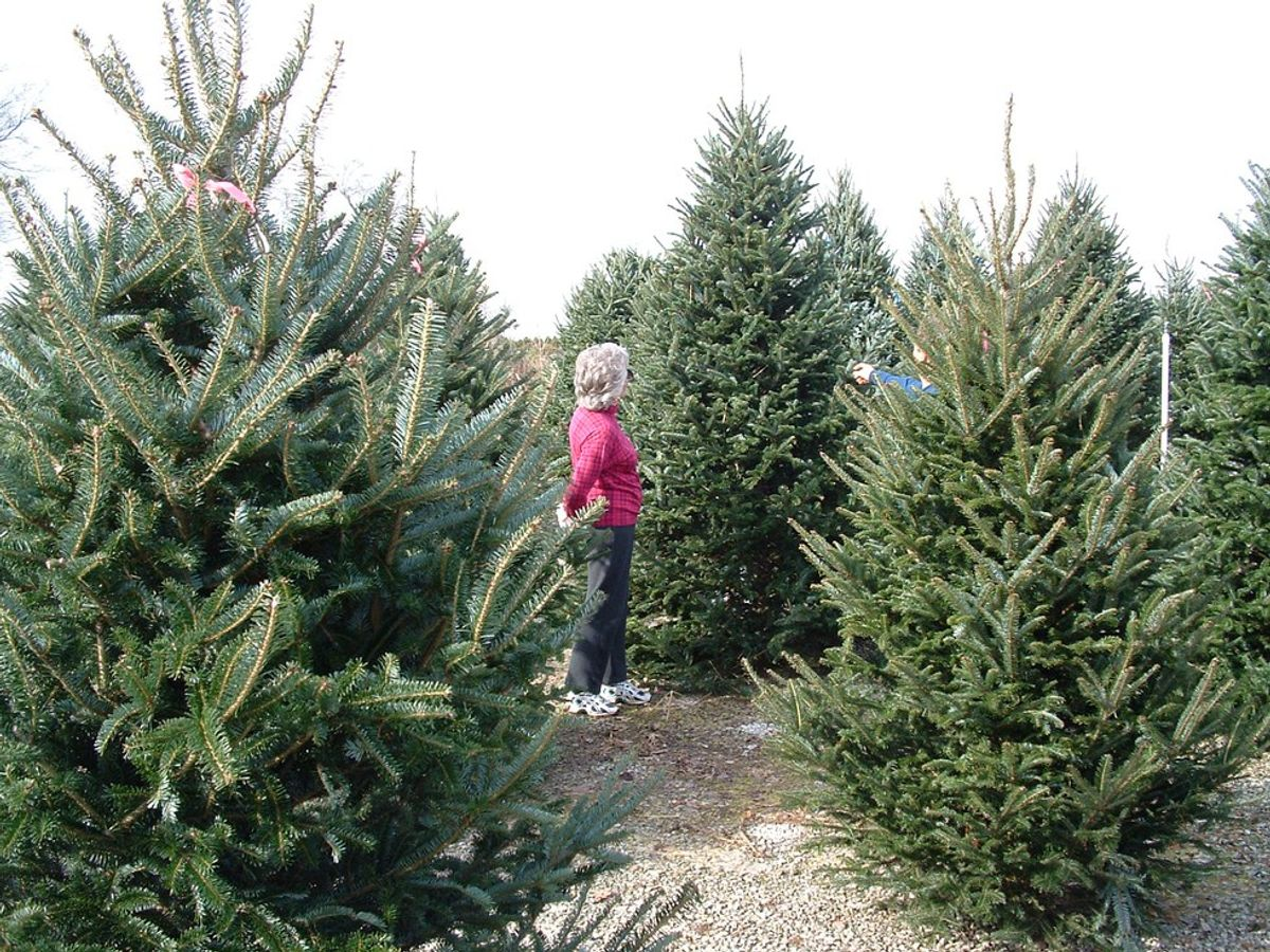 The Great Christmas Debate: 5 Reasons Real Trees Are Better Than Fake Ones