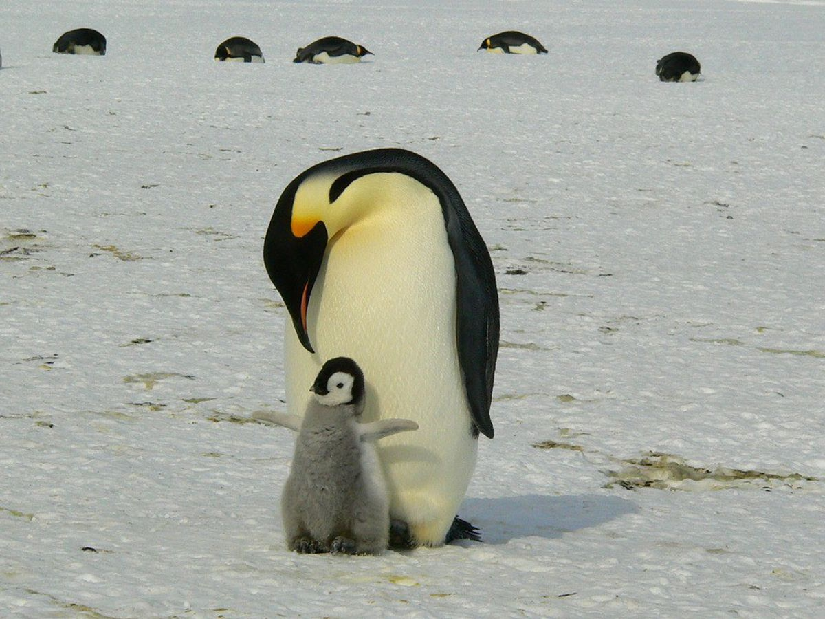 8 Reasons Why Penguins Are The Best