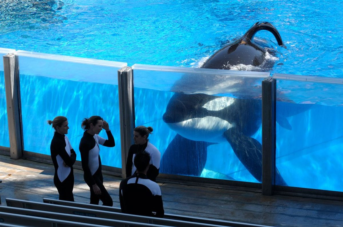 The Death Of Tilikum And Whales In Captivity