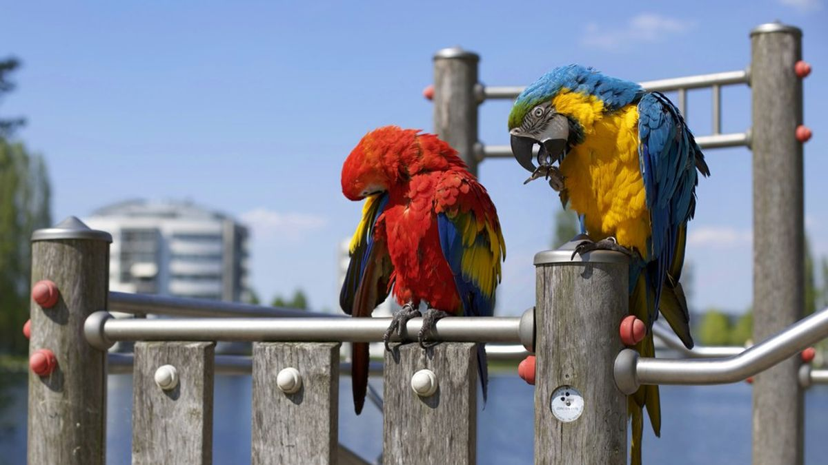 Looking At Humanity's Differences Like We Look At Different Birds