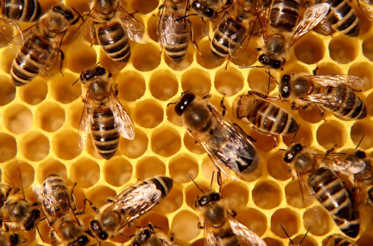 3 Things That Will Happen if Bees Go Extinct